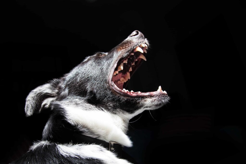 Dog Attack Attorney in Augusta, Georgia