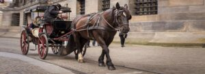 Horse Carriage Liability in an Accident   Charlotte Car Accident Attorney