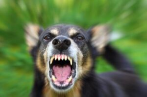 If you are bit by a dog in Atlanta are you guaranteed damages?